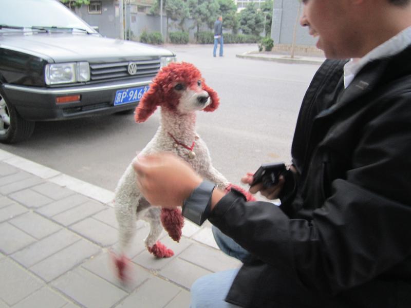 dog at 798