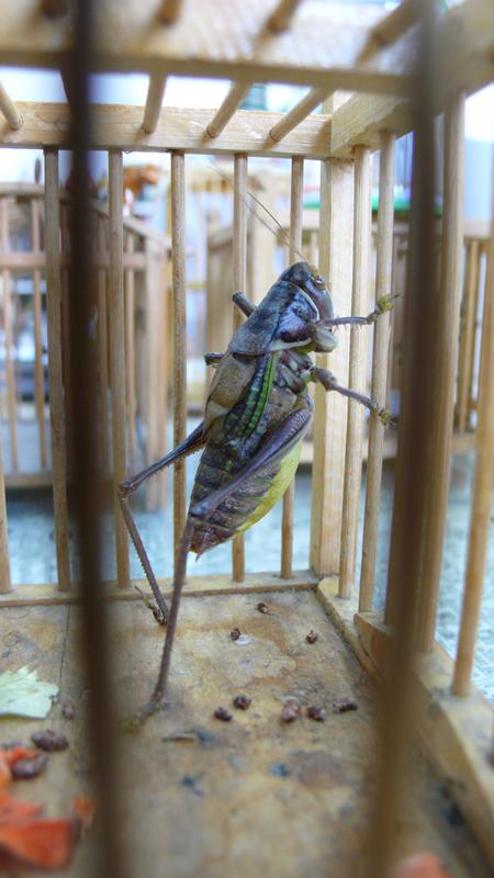 cricket at BASE