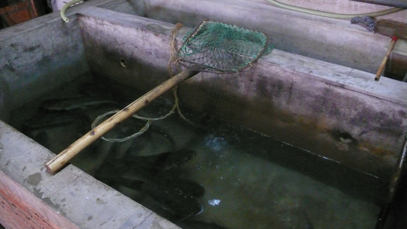 water basin with fish